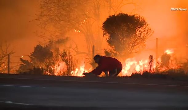 Héroe anónimo se vuelve viral al salvar conejito de incendio