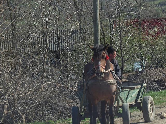 Normalka na rumuńskich bocznych drogach (okolice Buzau, kwiecień 2015)