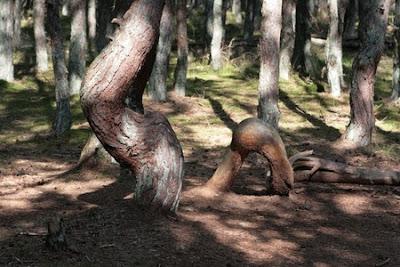 Танцуващата гора