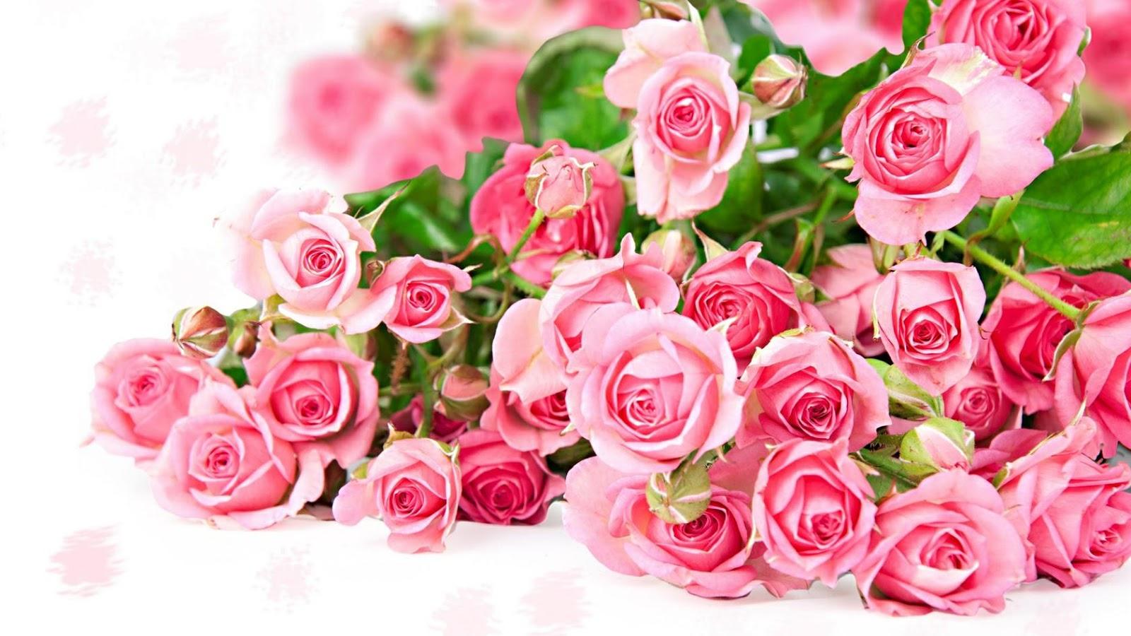 Pencinta Bunga Cantik Khas Surabaya Makna Warna Bunga Mawar
