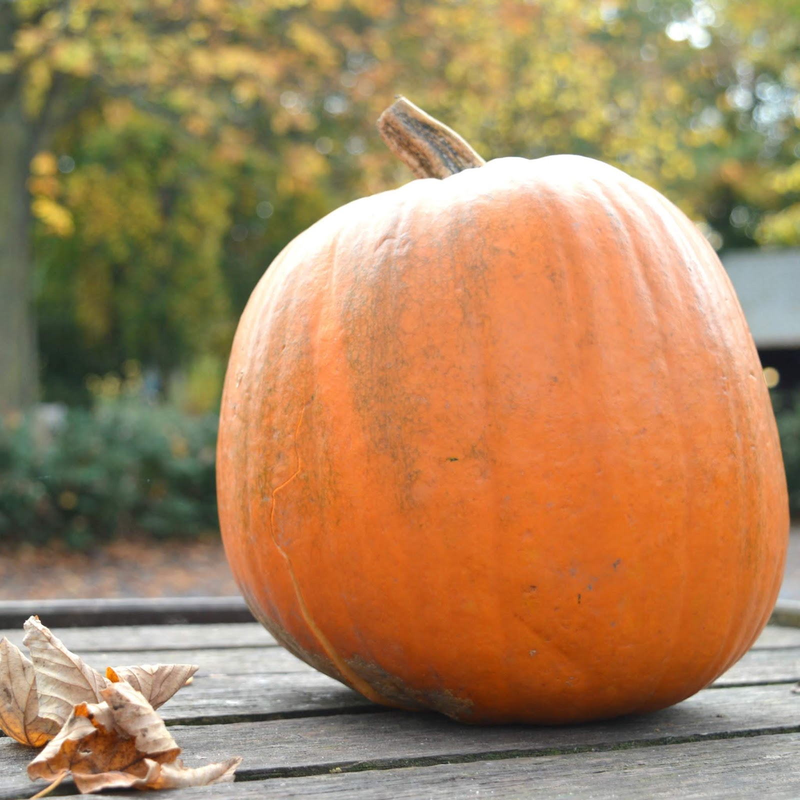 Autumn Days Out in the North East - Pumpkin Picking