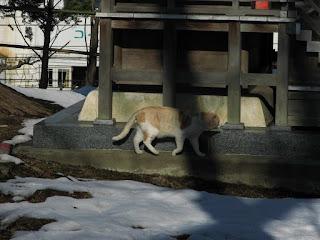 猫の初詣 小さな稲荷神社にやってきた