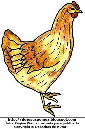 Gallina colorada a color. Dibujo de gallina de Jesus Gómez