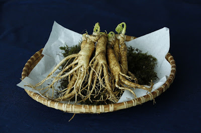 Ginseng herb - Top 10 Herbs to Treat and Prevent Cancer