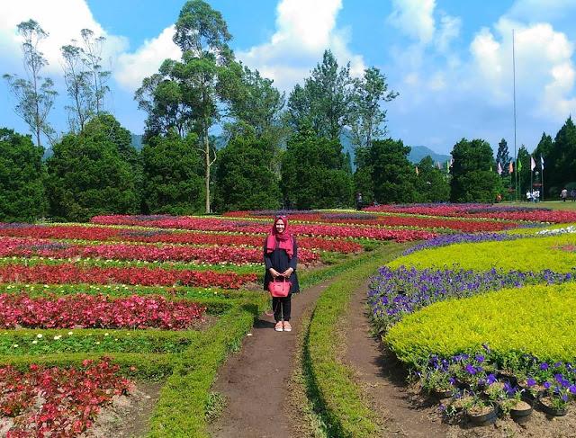 foto bunga cantik di taman bunga nusantara