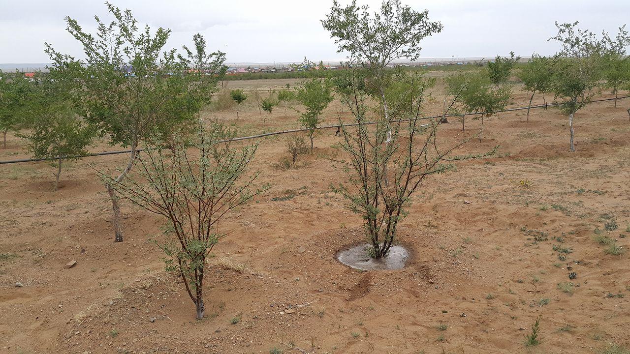 how to grow in desert