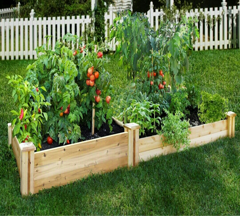 Plan to start a small vegetable garden? Small pot,  small container, square foot is the perfect for growing vegetables in limited time and good ideas if you have small space in your backyard. Planting vegetables is one of right decision now a day beacause of economy. Except of saving money, you can learn how to be independent by your self and also learning to provide for your family.