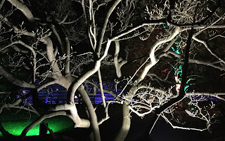 Pic of tangled branches lit up at Christmas at Kew