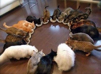 Tips agar kucing mau memakan nasi