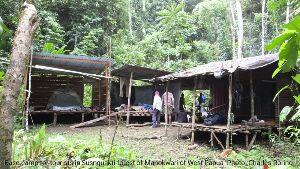 Hutan Susnguakti di Manokwari