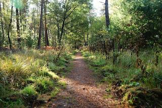 Ein gerader Wanderweg führt durch den Sonnendurchfluteten Wald