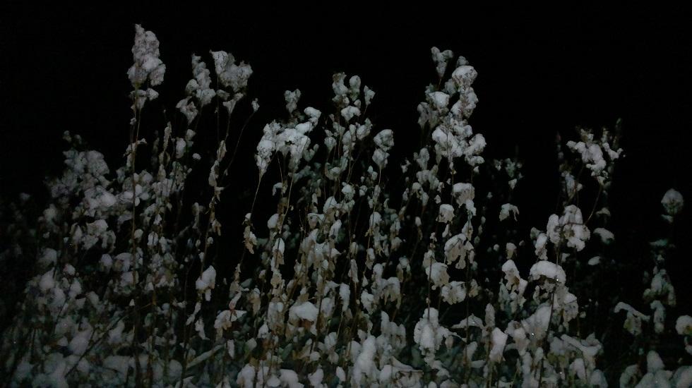 lumiset heinän korret pimeässä