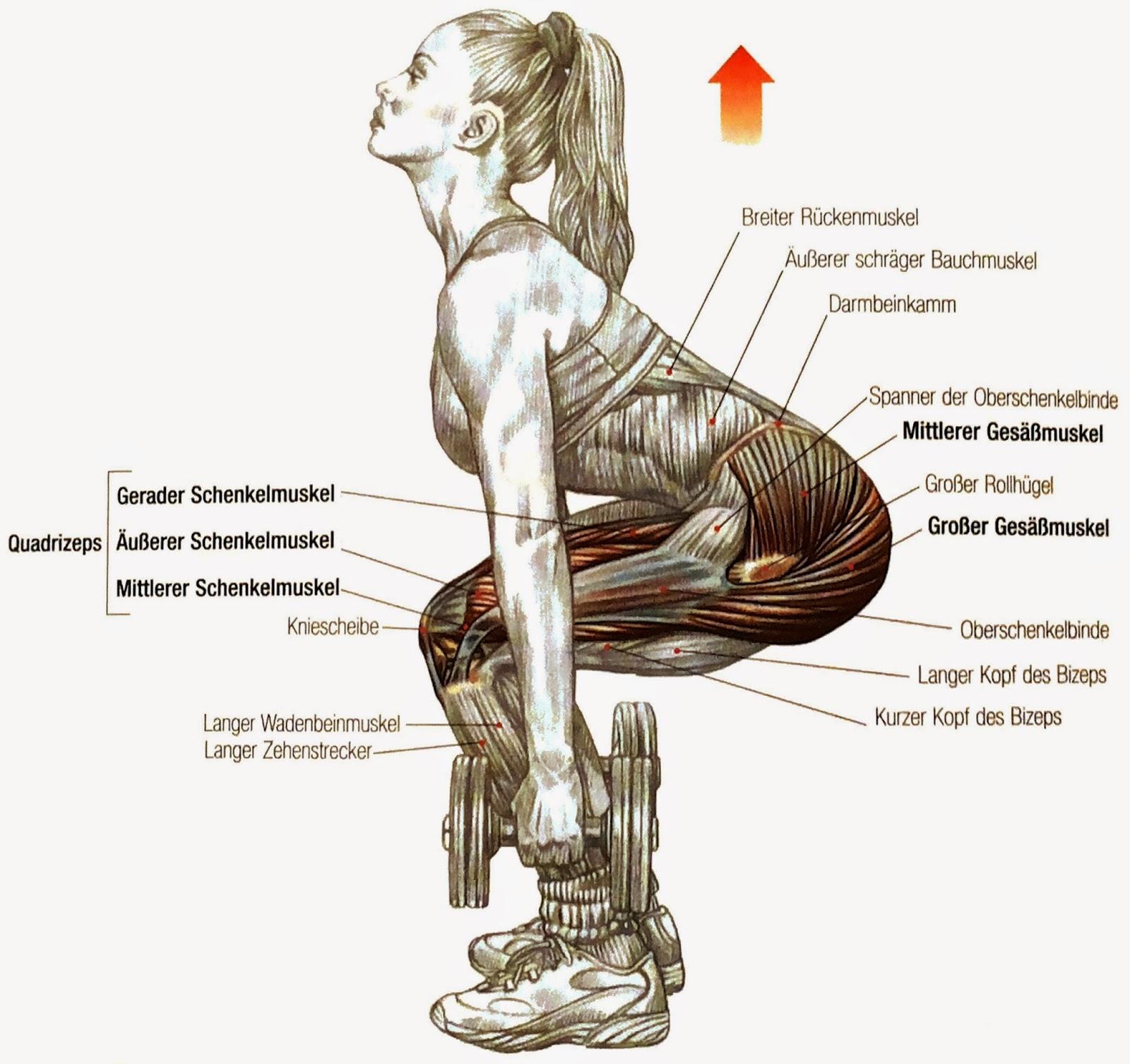 Wieviel werden die Muskeln der Hände nach dem Training wieder ...