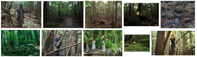 13 Hal Aneh Tentang Hutan Bunuh Diri di Jepang, AOKIGAHARA!