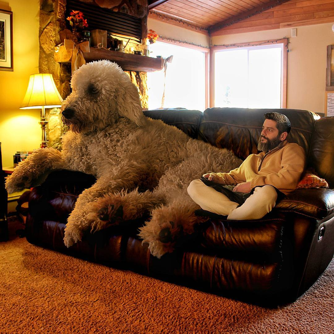 12-The-Cute-Dogs-are-on-TV-Christopher-Cline-Juji-The-Giant-Dog-Photo-Manipulations-www-designstack-co