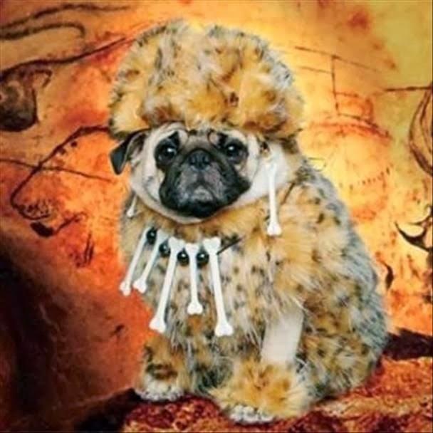 Funny Caveman Dog Costume Joke Picture