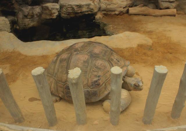 ハダカデバネズミや歩く植物??上野動物園で見逃せないなおすすめ動物8つ【n】 爬虫類館 巨大なリクガメ