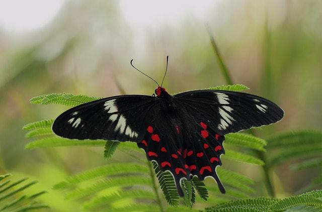 أجمل الفراشات في العالم