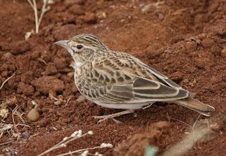 Mengetahui Lebih Dekat Tempat Sarang Burung Apung Di Alam Liar