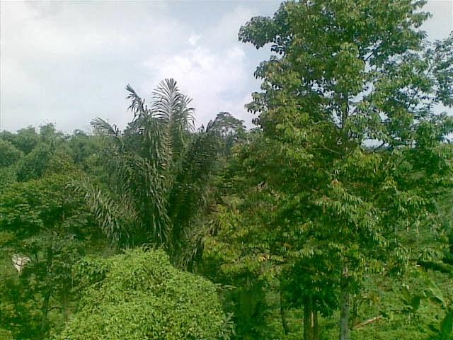 Foto(5081) Jual Tanah | Tanah Di jual, luas 4,25 ha kebun jual tanah di puncak