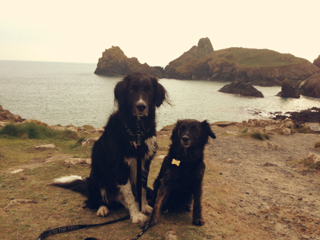 Cornwall-holiday-with-dogs