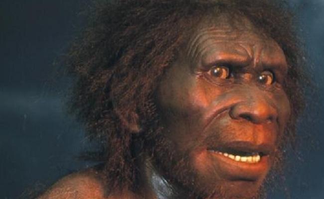 Ciri-ciri Sinanthropus lantianensis (Homo erectus lantianensis)