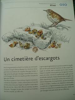 http://lescoupsdecoeurdecmetsamamam.blogspot.fr/