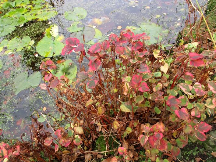 Roger Brook - the no dig gardener: Bog blog  Love your wet soil