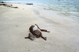 pantai pulau pasumpahan kotor