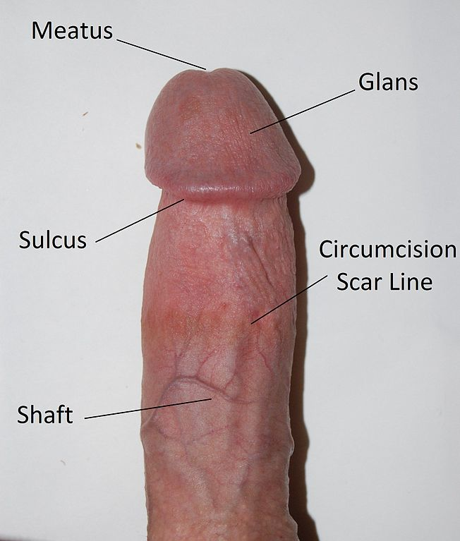 squeezing base of penis erections jpg 1152x768