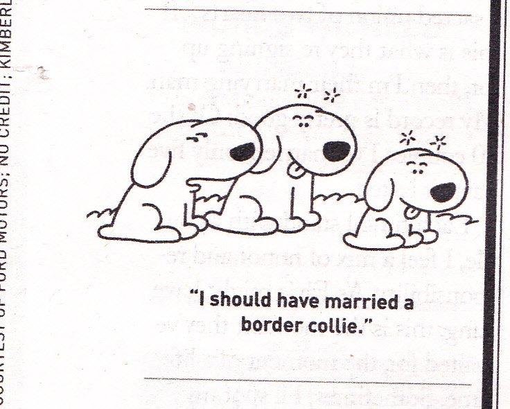 DeltaBluez Stockdogs: Sunday Dog Comics