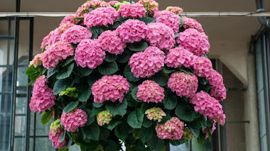 Cestas colgantes de plantas en flor en Longwood Gardens