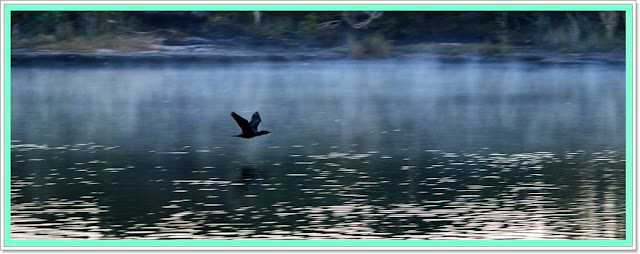 misty bird on  lake