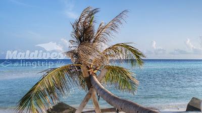 Maafushi Island Maldives Review
