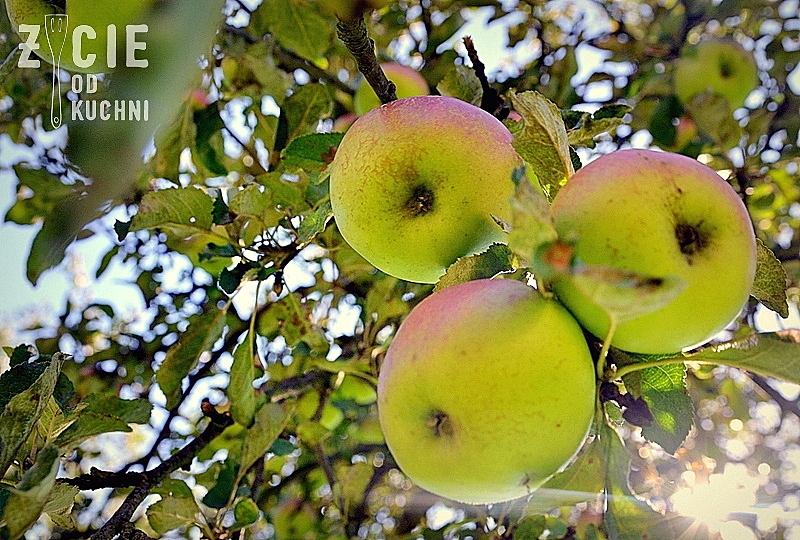 jablon, jablka, jablka na jabloni, szarlotka, zycie od kuchni