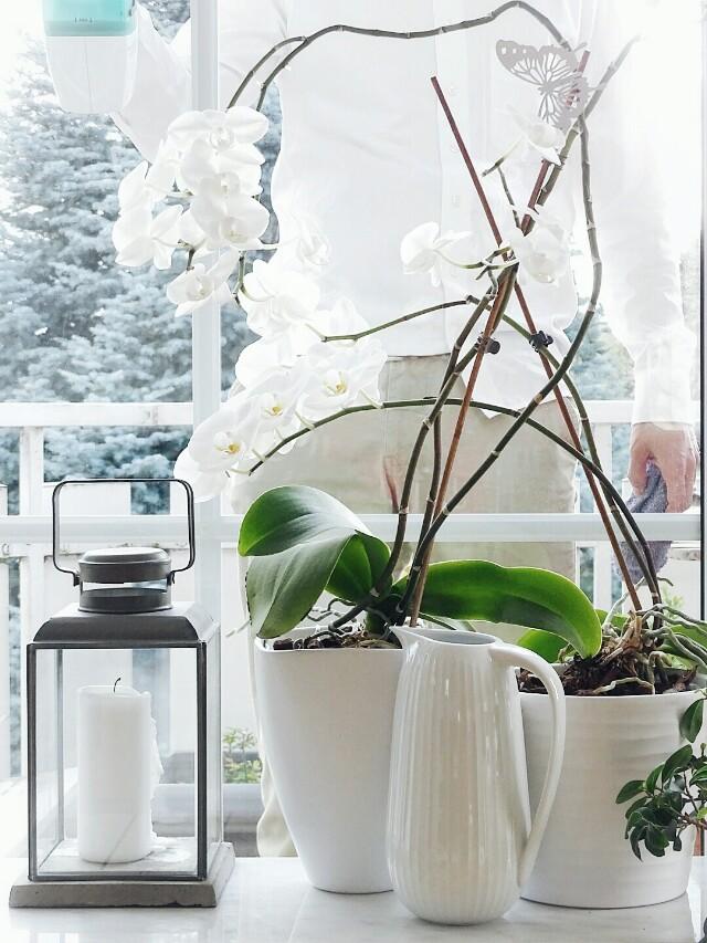 Deko-Ideen mit Pflanzen | weiße Orchideen | Lieblinge und Inspirationen der Woche | Personal Lifestyle, DIY and Interior Blog | Auf der Mammiladen-Seite des Lebens
