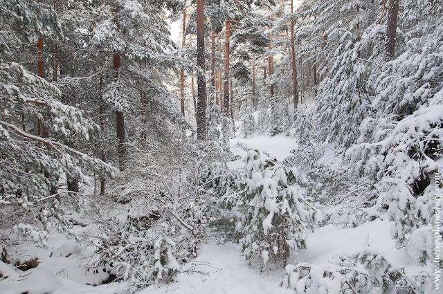 Ruta circular Parque Guadarrama nieve raquetas sencilla paisajes