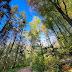 Bumi Tengah Sekarat, Waktunya Aksi Nyata Peduli Hutan dan Lingkungan