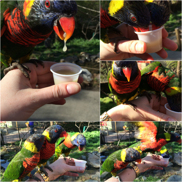 feeding the lorikeets at riverbanks zoo
