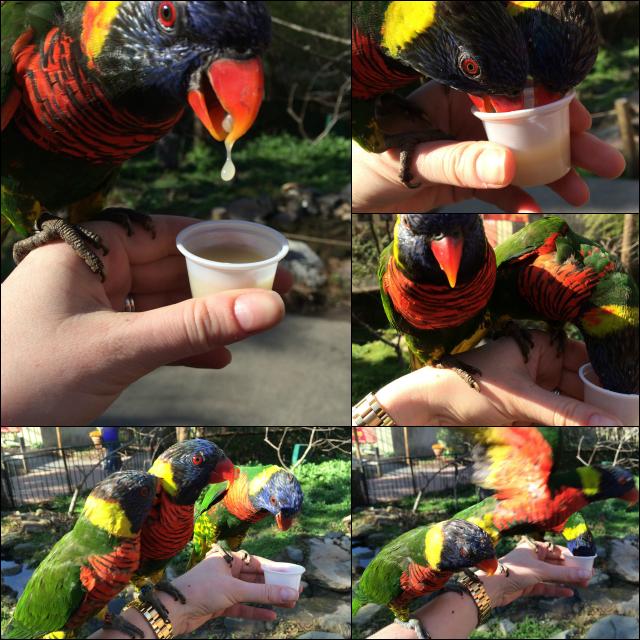 feeding the lorikeets at riverbanks zoo