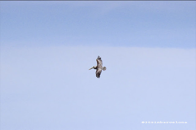 Bird in Holbox island, México