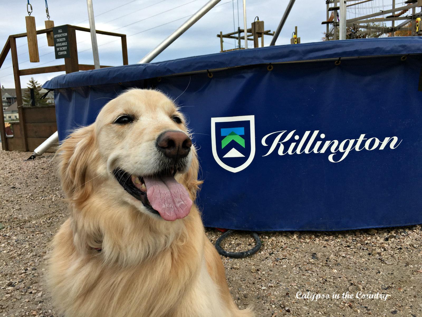 Killington Vermont Adventure Center with golden retriever