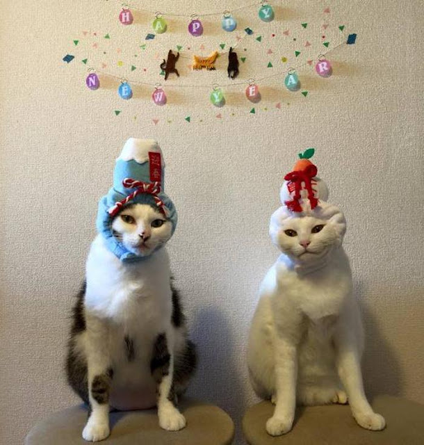 Đôi mèo cáu kỉnh cứ thấy chủ ăn là ra lườm nguýt