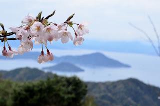 桜と広島湾の島々