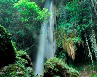 Εικόνες τροπικού δάσους στην «καρδιά» της Ηλείας