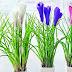 Chamba: अब फूलों की खुशबू से महकेगा चंबा का ऐतिहासिक चौगान