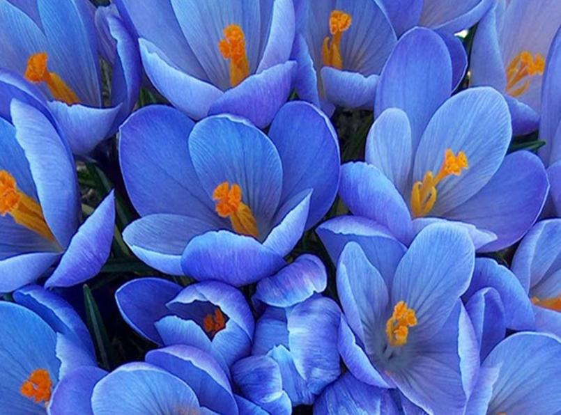 Fotografias de flores preciosas Fotografias y fotos para