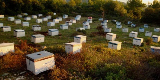 Νέος μελισσοκόμος: Συμβουλές για την αρχή