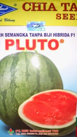buah besar, daging merah, buah bulat, semangka non biji, semangka Pluto, Non Biji Pluto, Cap Kapal Terbang