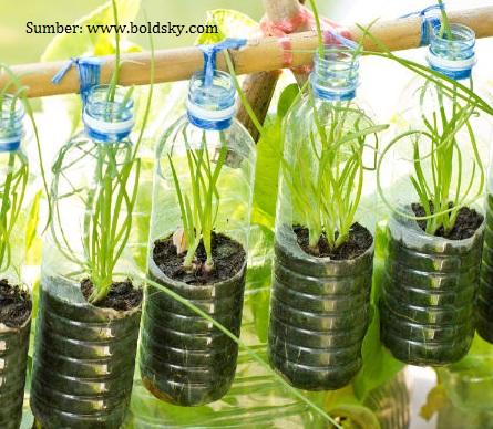 10 Instalasi Kebun Hidroponik Botol Plastik Bekas Kreatif